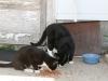 Barn cats on the Mueller farm- 2010
