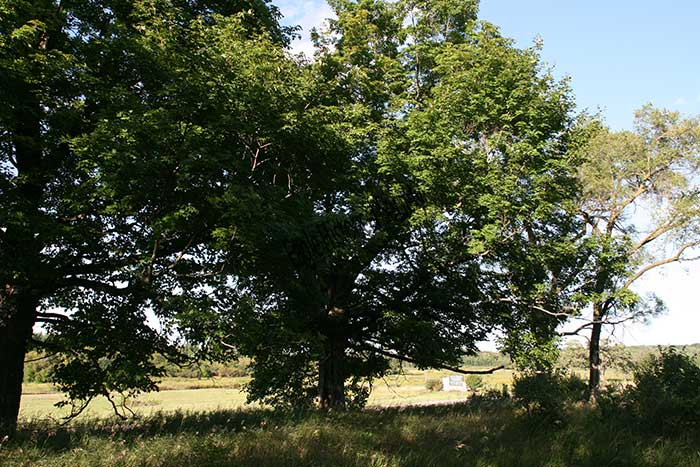Site of Former Steinhoff farm-2009