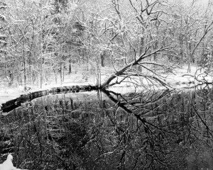 Snow Reflection At Paradise Springs