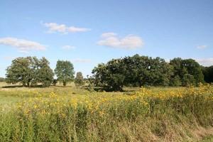 Restored Prairie on the Steinhoff farm site-2009